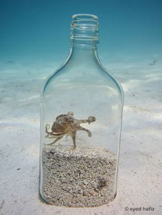 Very cool pic. This is a coconut octopus.