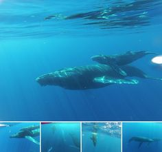 We love whale season in Hawaii!
