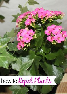 How to Repot Plants & Make a Centerpiece #TBCCrafters