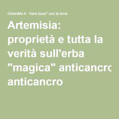 """Artemisia: proprietà e tutta la verità sull'erba """"magica"""" anticancro"""