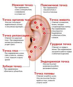 Ear Reflexology, Spine Health, Face Massage, Alternative Treatments, Medicinal Herbs, Tai Chi, Alternative Medicine, Natural Medicine, Health And Beauty