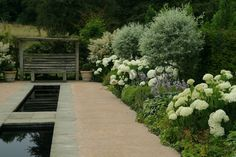Rill Garden - hydrangeas in bloom