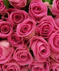 100 pink long stem roses shipped directly from our certified environmentally friendly, rain forest certified farm. Roses Gif, 100 Roses, Pink Roses, Orange Roses, Rose Delivery, Same Day Flower Delivery, Signs Youre In Love, Rose Stem, Rose Essential Oil