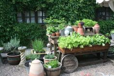 My kitchen garden salad and herb beds