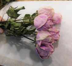 This bunch of fresh cut and dried gorgeous lilac/lavender roses is perfect for your floral needs. Approximately 15 inches in length with 6 roses. Roses are approximately inches in length and inches in diameter. These roses dried beautifully! Drying Roses, Lilac, Unique Jewelry, Handmade Gifts, Plants, Etsy, Products, Old Age, Honesty
