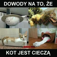 Funny Mems, Funny Cat Memes, Wtf Funny, Bts Memes, Hilarious, Funny Animals, Cute Animals, Polish Memes, Weekend Humor