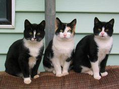hierarquia gatos