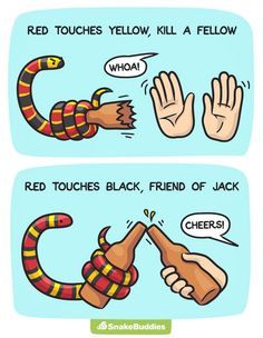 """Red and Yellow Kills a Fellow? Your Identification Guide to Tri-color snakes."""