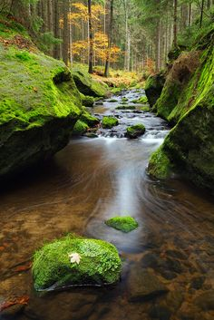 Calm Stream in Bohemian Switzerland Natural Park, Czech Republic Foto Nature, All Nature, Amazing Nature, Science Nature, Nature Tree, Natural Park, Natural World, Beautiful World, Beautiful Places