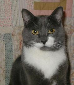 Cat of The Day July 18, 2015 http://www.freebiecat.com/cat-of-the-day.php