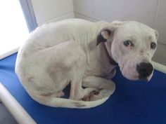 Please help abeautiful rescue survive...The Time Has Come...