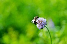 #photography #nature #flower #animals #wildlife