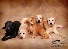 5 perfect dogs