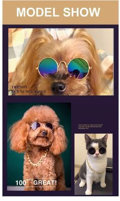 Fashion Cat Glasses Small Pet Sunglasses Grooming Eye-wear Protection Puppy Cats Dog Glasses Cool Photo Props Funny Pet Products on Pet Supplies 8779 Online Pet Supplies, Cat Supplies, Funny Cats, Funny Animals, Adorable Animals, Dog With Glasses, Cat Leash, Cat Cages, Love Your Pet