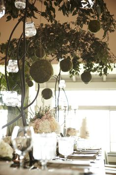 Indoor trees and moss covered spheres