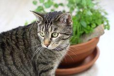 [Anzeige] DIY-Katzengarten für Wohnungskatzen