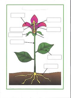 Flower Badge - Parts of a plant and flower posters/worksheets Plant Science, Science Fair, Teaching Science, Science For Kids, Science And Nature, Girl Scout Badges, Girl Scout Troop, Brownie Girl Scouts, Parts Of A Flower
