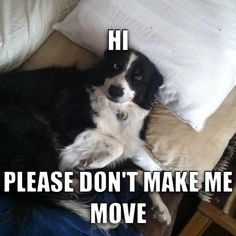 Border collie tricks like my dog does...ugh!