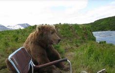 """""""Bär will nur chillen"""""""