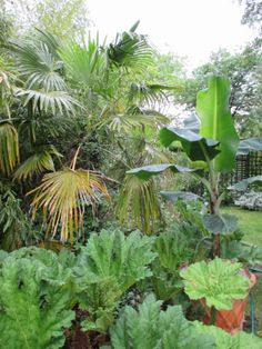 Hoe hoe grow: The mysteries of the sub-tropical garden
