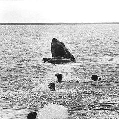 Deleted scene of Jaws eating Alex Kintner