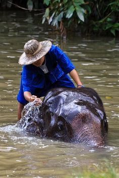 Elephant Conservation Center Thailand   by liquidkingdom, via Flickr
