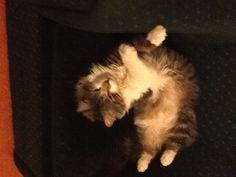 Twisty kitty!