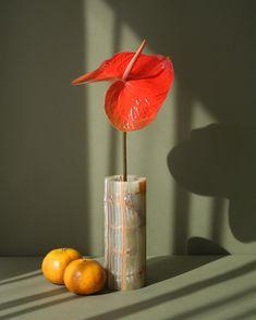 stunning anthurium still life. Still Life Photos, Still Life Art, Object Photography, Still Life Photography, Design Textile, Floral Design, Set Design, Design Ideas, Foto Still