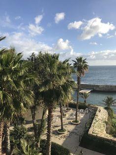 Palm trees 🌴🌴🌴 Malta
