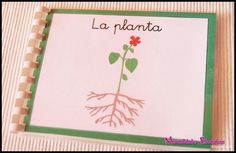 - The Learning Patio Plant Science, Science And Nature, Plant Projects, Projects To Try, Cartoon Wallpaper Iphone, Montessori Preschool, Montessori Materials, Classroom Inspiration, Reggio Emilia