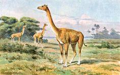 The Dinosaurs and Prehistoric Animals of Nevada: Various Megafauna Mammals