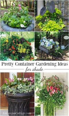 12 beautiful ideas for shade-loving flower planters.