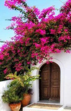 Bougainvillea, Cottage Garden Plan, Cottage Garden Design, Cottage Gardens, Backyard Garden Landscape, Garden Landscaping, Unique Cottages, Evergreen Vines, Flower Window