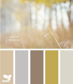 Fall wheat field color palette - neutral and inviting