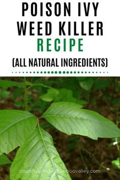 A more natural, cheaper way to kill weeds, including poison ivy. A homemade poison ivy and weed killer that works. Kills other weeds too. Poison Ivy Killer, Poison Ivy Vine, Poison Ivy Leaves, Poison Oak, Posion Ivy Plant, Kill Poison Ivy Naturally, Identify Poison Ivy, Poison Ivy Remedies, Weed Killer Homemade