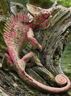 Chameleon (sp ck)