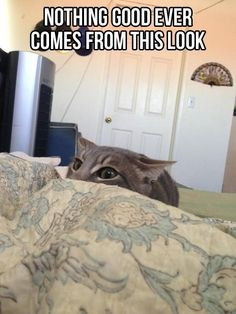 This look usually means I'm going to get attacked! Re-pin and click here for a FREE bag of World's Best Cat Litter! http://womanfreebies.com/free-samples/worlds-best-cat-litter/?catface