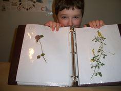 Nature Studies – Wildflowers – Eclectic Homeschooling