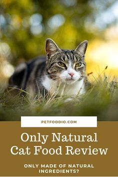 Only Natural Cat Food: Only Natural Ingredients? - PetFoodio.com-Want to know if Only Natural cat food is the best option for your cat? Take a closer look at this brand's ingredients to learn the truth today! #catfood #catfoodreview #onlynatural #onlynaturalcatfood #onlynaturalcatfoodreview Healthy Cat Food, Dry Cat Food, Owning A Cat, Natural Flavors, Closer, Cat Lovers, Cats, Nature, Gatos