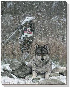 "David Wenzel Open Edition Wrapped Canvas:""No Trespassing – Wolf"" Lone Wolf Quotes, Wolf Stuff, Big Bad Wolf, Guide Dog, Wild Creatures, Canvas Designs, Wildlife Art, Spirit Animal, Paisajes"