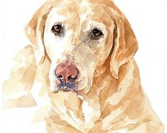 Yellow Lab Watercolor Limited Edition Print, labrador retriever painting