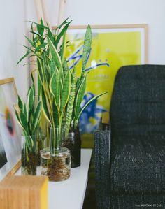 Water Plants Indoor, Aquatic Plants, Jungle Life, Rose Quartz Serenity, Lucky Bamboo, My Secret Garden, Plantar, Nature Decor, Container Plants