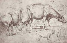 Cows, 1620  Peter Paul Rubens