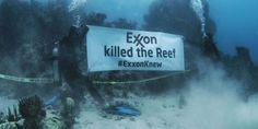 Rengârenk mercan resifi ağardı: Exxon biliyordu, mercanları Exxon öldürdü-  #iklimdeğişikliği