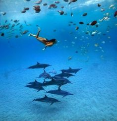 Snorkel with the dolphins.. by dustee.forster