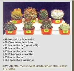 Types Of Succulents Plants, Weird Plants, Exotic Plants, Cacti And Succulents, Planting Succulents, Planting Flowers, Cactus Names, Succulent Names, Cactus House Plants