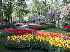 Tulips... Tulips .... Tulips!!