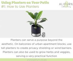 Got a patio? Does it need some sprucing up? Do it with Alifurn Patio Planters!