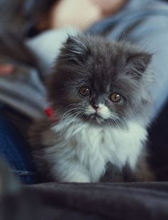 omg. aw. so cute. <3 i want to this kitten so badly.