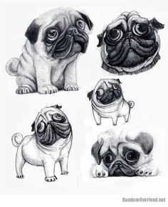 How to Draw a Dog | pug's caricature looks just like the real dog | Random Overload
